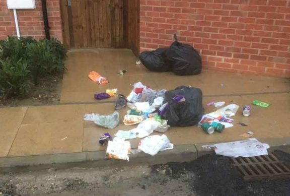 Rubbish bags attacked by a fox   Fox control Kent