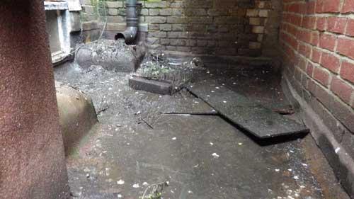 bird mess and bird clearance | Pest Control Ashford