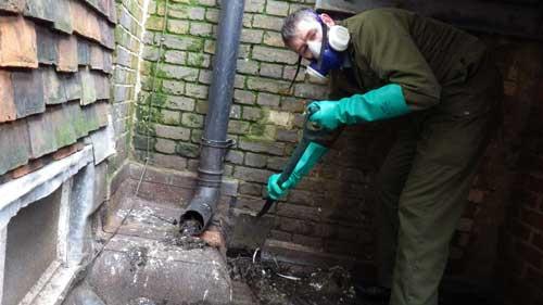 Pest-Tech carrying out bird clean up.