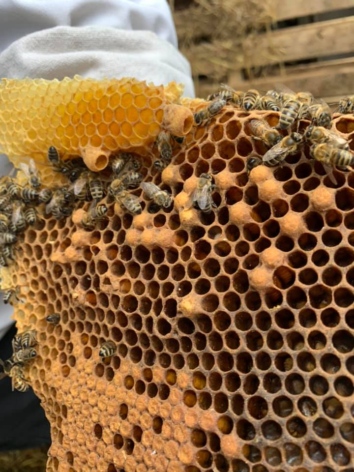 Removal of bees and honeycomb.