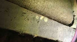 Woodworm infestation requiring a woodworm treatment.