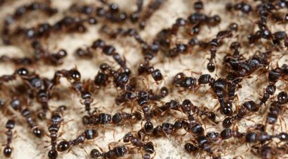 Ants in the house, ant treatment needed