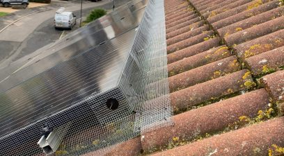 bird proofing on roof | Pest Infestation Kent