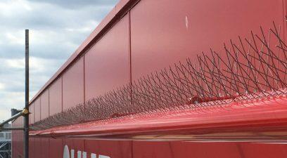 bird spiking | Wasp nest removal Maidstone