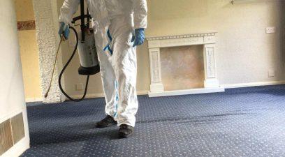 flea-treatment | Flea removal in Maidstone Kent