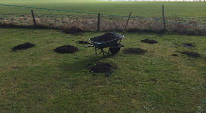 Garden mole removal in progress by the Maidstone Mole Catcher
