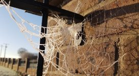 Spider removal identified by the web