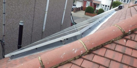 Solar panels protected from pigeons using mesh barrier.