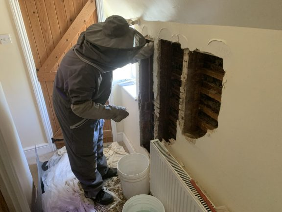 Pest-tech removing bees from a house