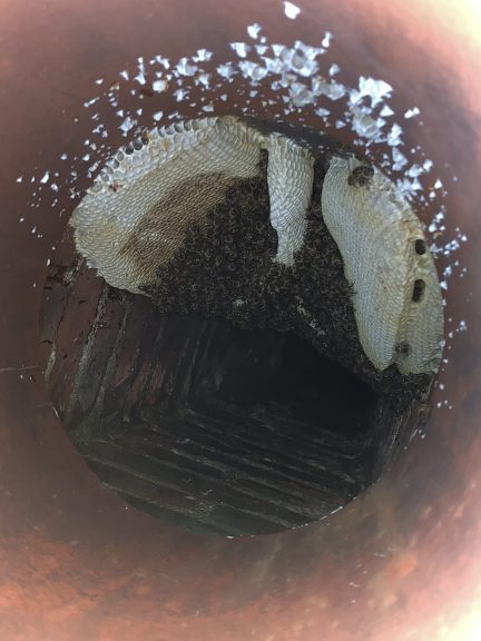 Honey bee removal from a chimney
