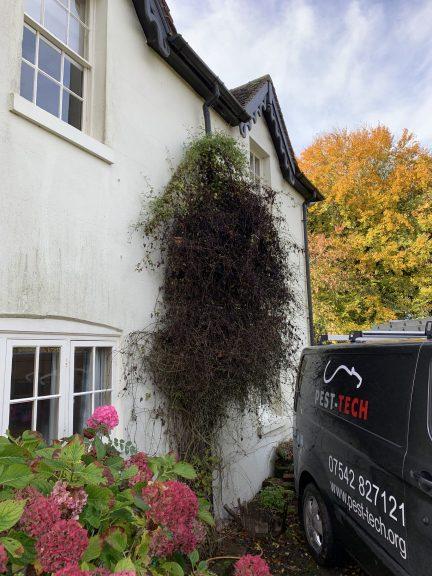 mice us foliage as a ladder. Pest Control Near Me