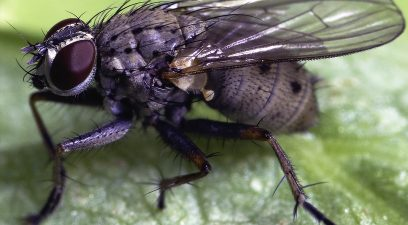 How to identify signs of a pest infestation in your home