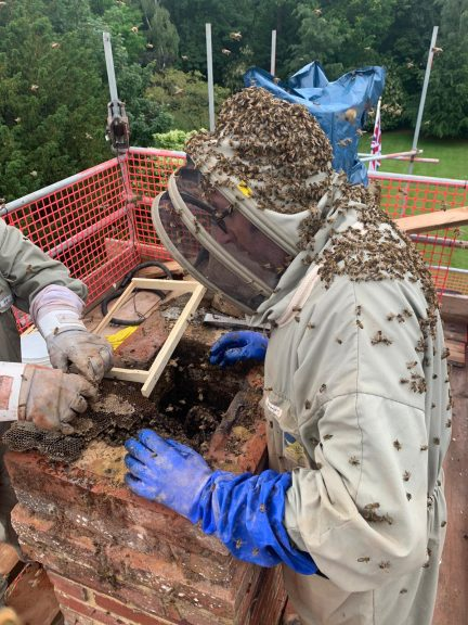 bee removal from a chimney