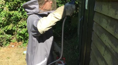 Get rid wasps in the garden